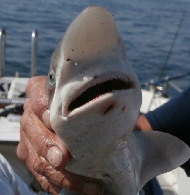 Ook Ruwe Haai voor de Dinsdagploeg