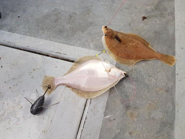 All in ankervissen met Northseacharters