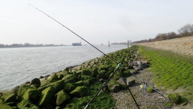 Vissen aan Maassluis, Taxi Jan