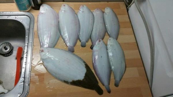Kees, op tong vissen aan de Botlek