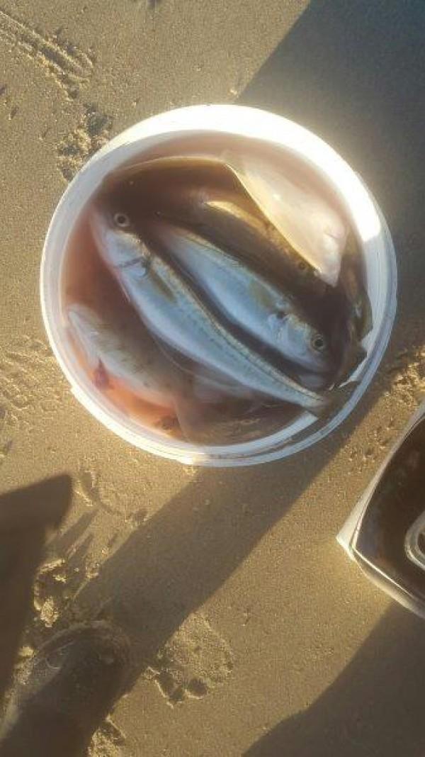 Ronald, strandvissen aan Zoutelande