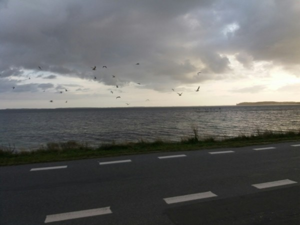 Kantvissen Denemarken(Funen)
