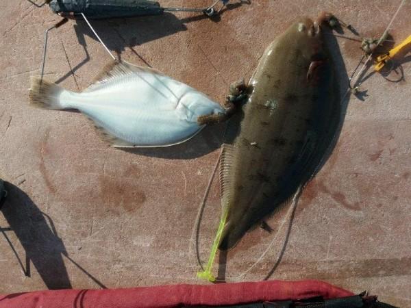 Tongen en andere vis meppuh, Waterweg