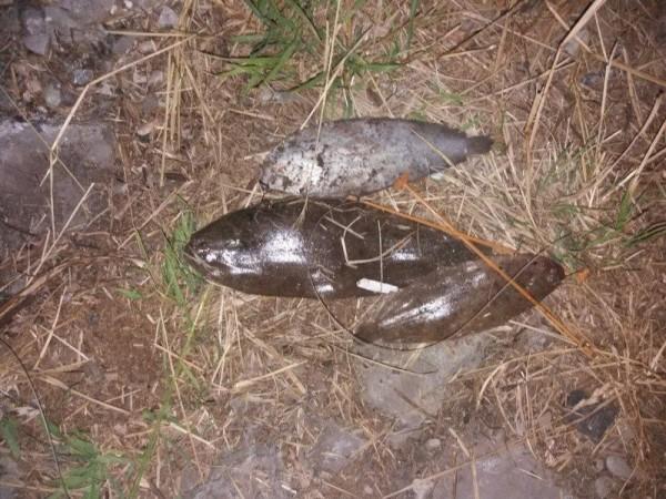 Vissen op Tong, nieuwe Waterweg