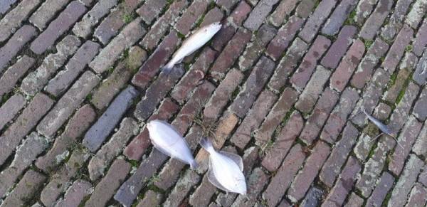 Eldert, vissen op tong, aan de Botlek