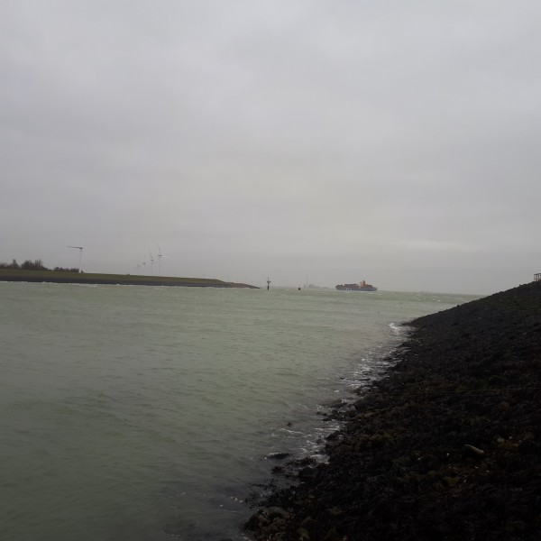 Nico, kantvissen Vlissingen haven