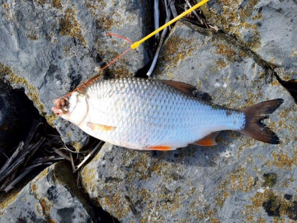 Eldert, op Tong vissen aan de Botlek