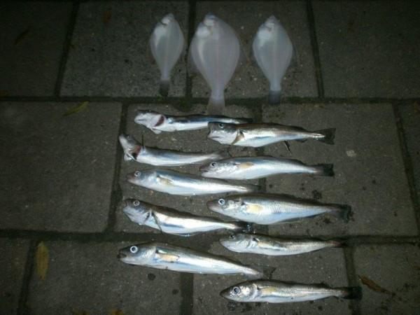 Huib, wintervis aan Kruiningen