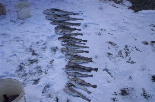 Zeevissen in Langeland, de goeie ouwe tijd.