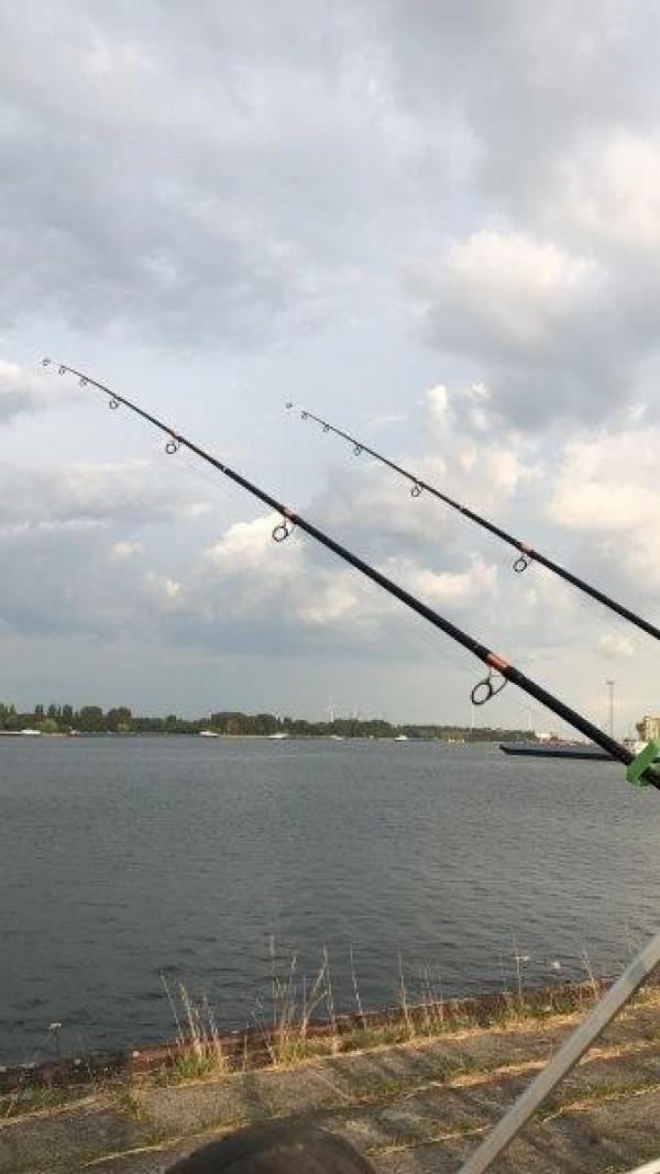 Nicky, vissen Maassluis, Antwerpen en Forelvijver
