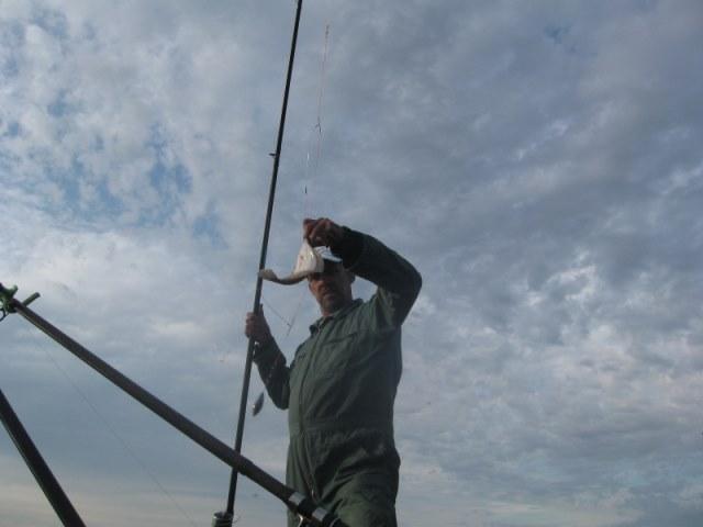 Variatie aan vis, aan het Beerkanaal