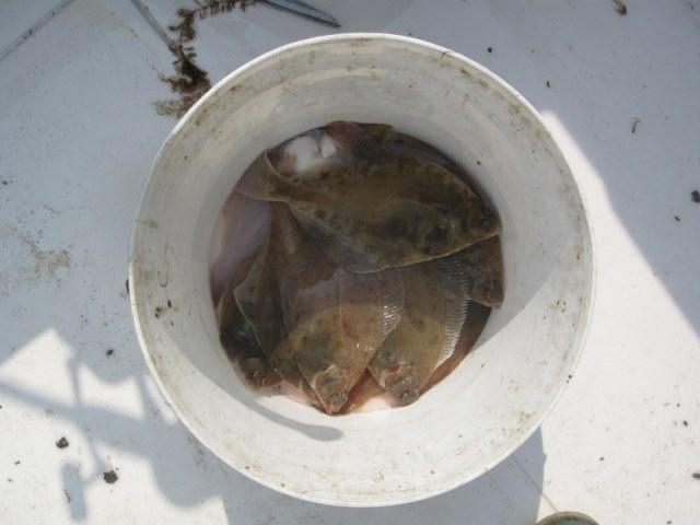 Bootvissen Oosterschelde, Kattendijke