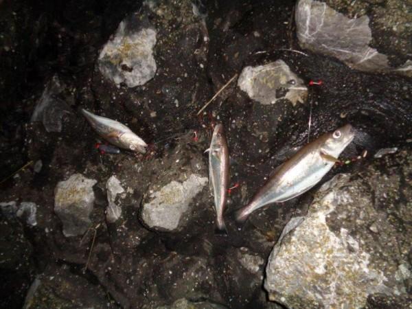 Huib, vissen aan Waarde