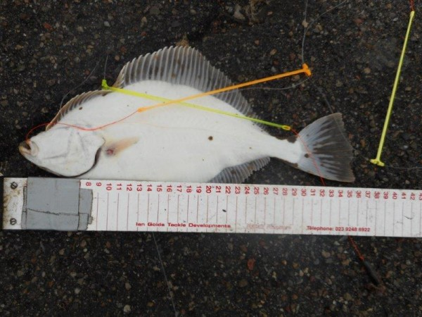 Week solo kantvissen aan Nyborg, Denemarken