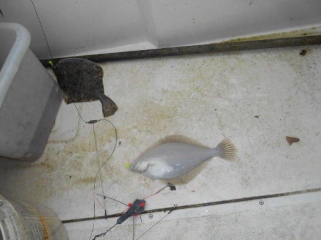 Vissen in de VoorDelta