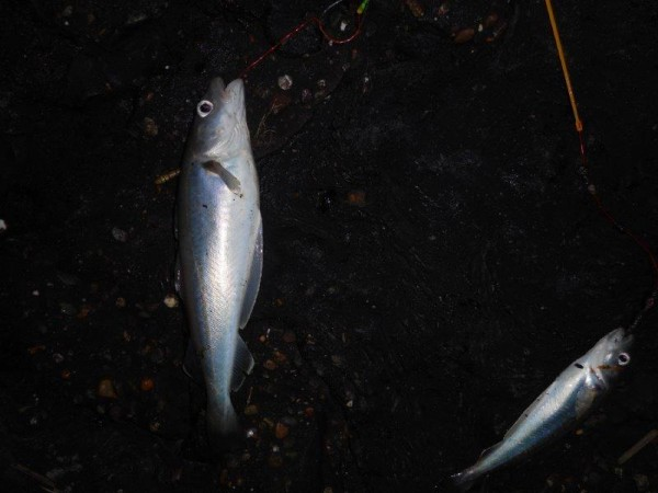 Vissen met Jan, aan Waarde