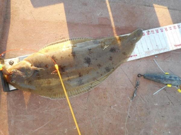 Solo, op tong vissen, in de Nieuwe Waterweg
