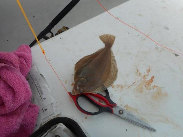 Bootvissen Oosterschelde, met dood getij