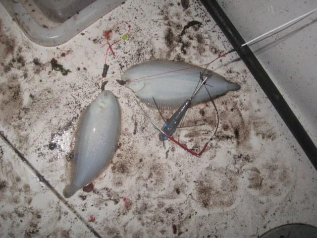 Nachtvissen met de boot aan Domburg op herhaling