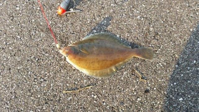 Kees, vissen aan de Waterweg