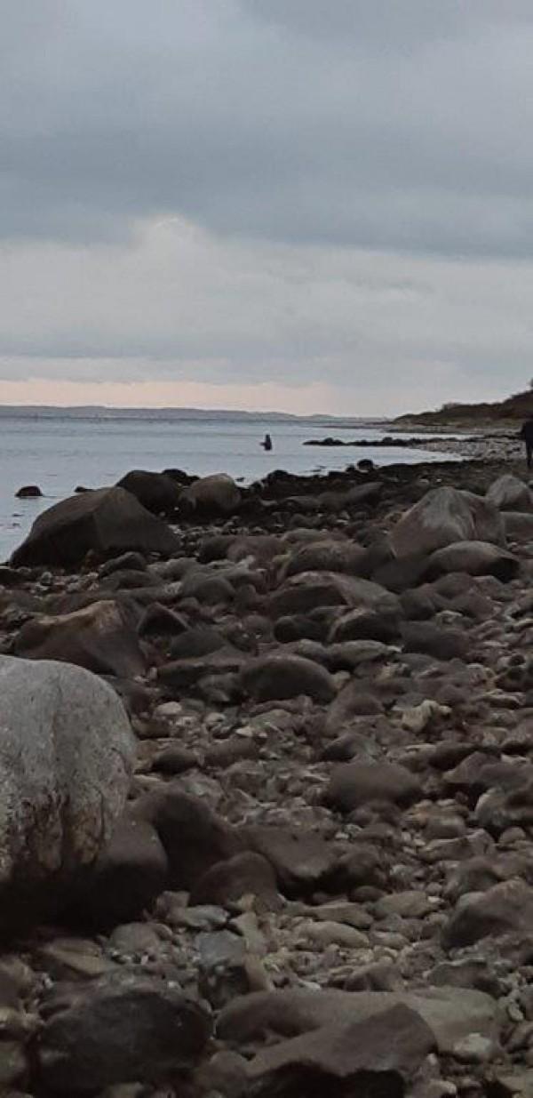 Cor, Zeeforellen op Funen(Denemarken)