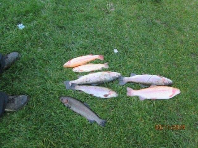 Vissen in Zeeland/Europoort, de Limburgers