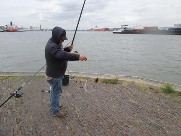 De Limburgers vissen in Zeeland en Europoort