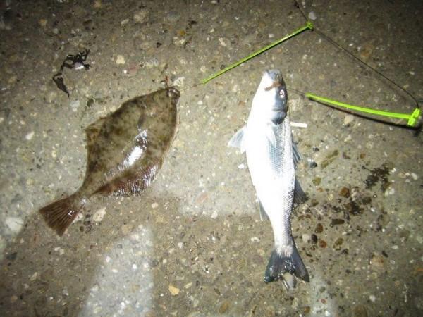 Hugo, nachtje vissen Waterweg
