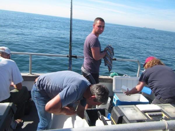 Alain Tulleneers, op de makreel