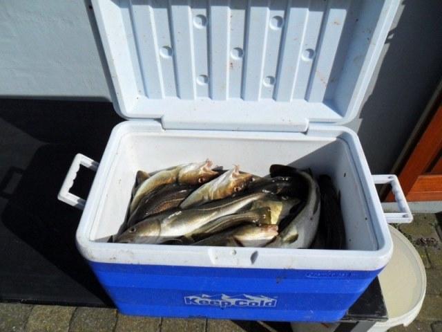 Vissen in Langeland, met Kees en kornuiten