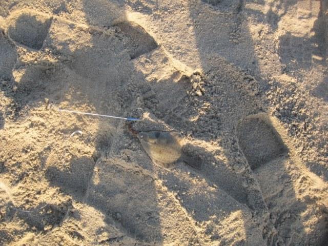 Strandvissen aan Ter Heijde met De Eurovissers
