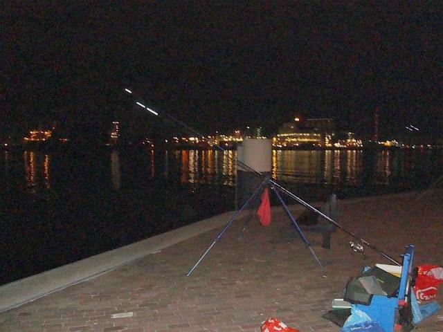 Willemgaatvissen aan de Waterweg
