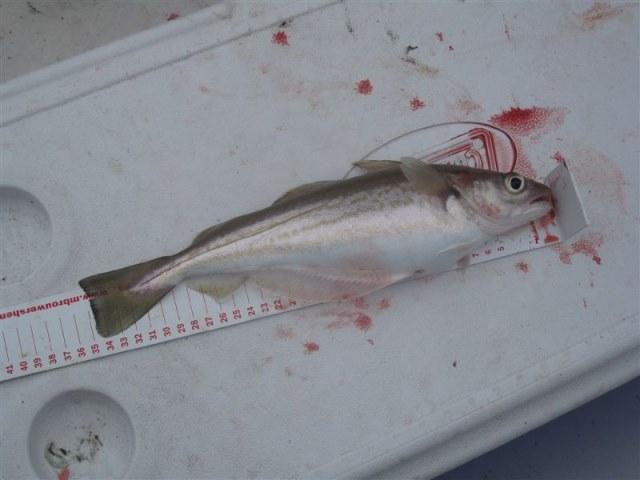 Wrakvissen met Rover-seafishing