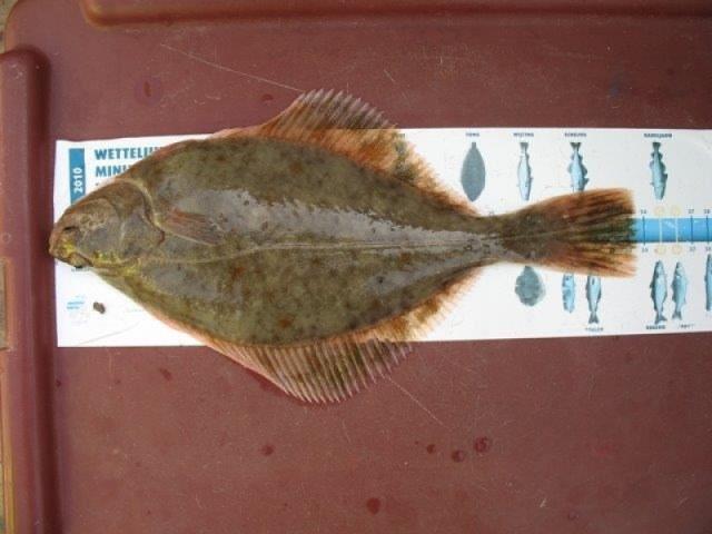 Vissen in de VoorDelta en de Oosterschelde
