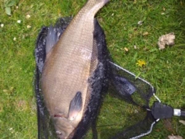 Leen, opnieuw vissen aan de Singel