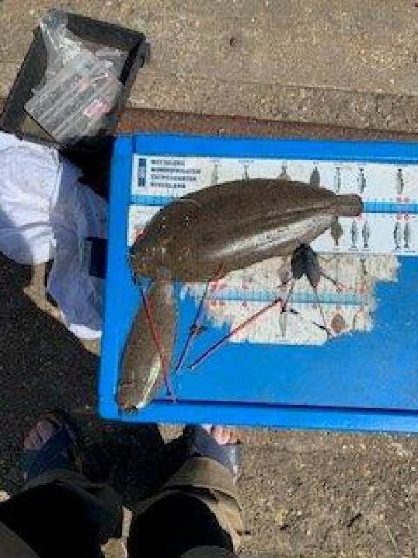 Wil, vissen aan de Waterweg