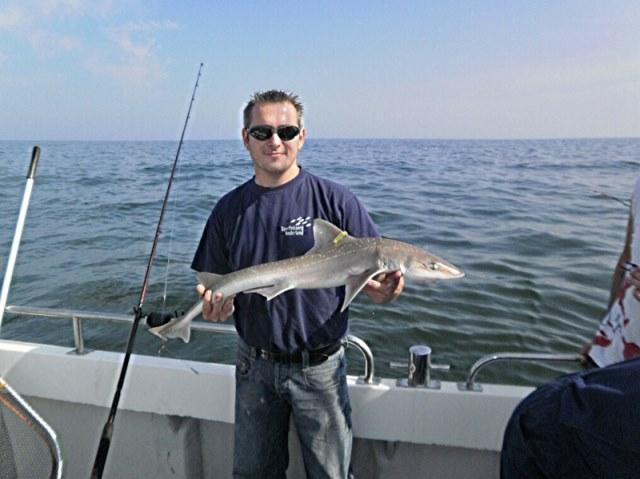 Haaien vissen met De Big Marlin