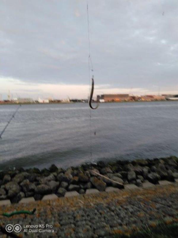 Ies, vissen op Tong