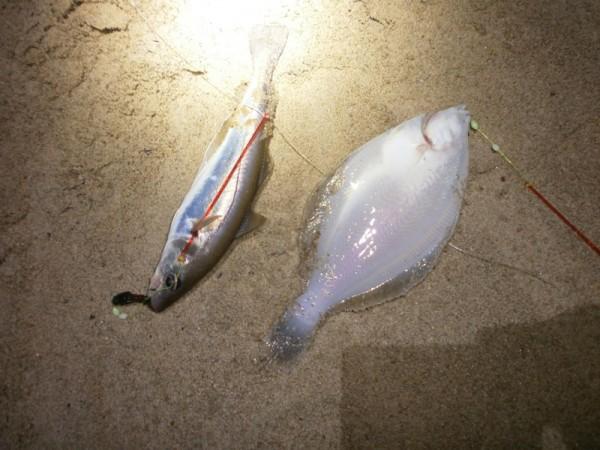 Huib, vissen aan Zoutelande en de Westerschelde