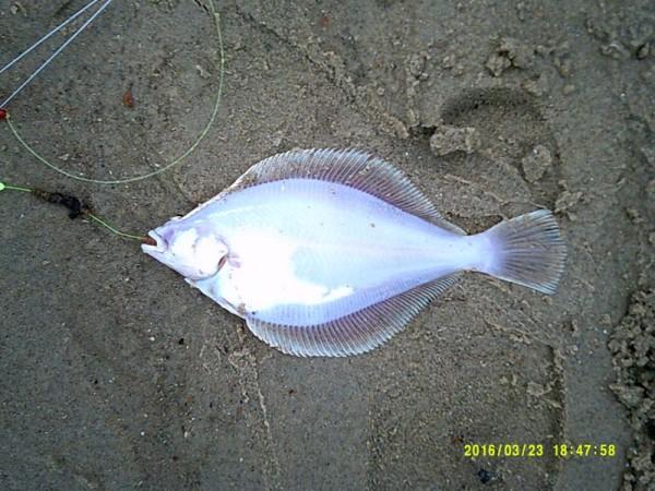 Vissen aan de Oosterschelde en Zoutelande, Huib
